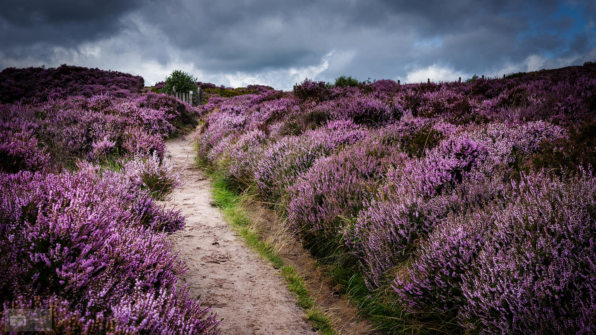jdtphotography.co.uk footpath in purple heather