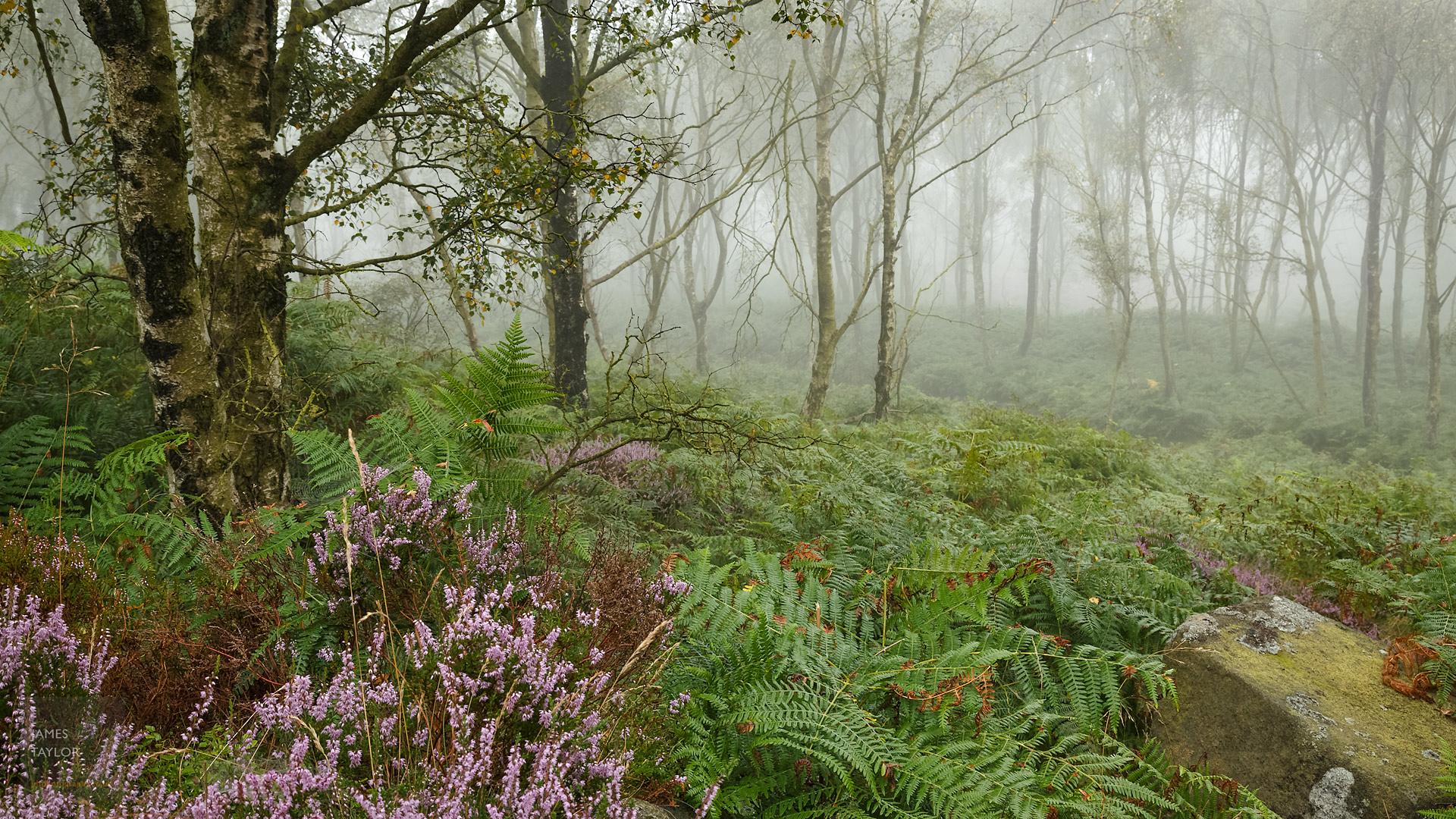 jdtphotography.co.uk foggy woods