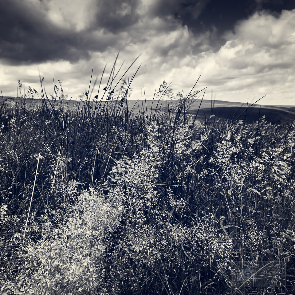 peak district in black and white flowers in the wind