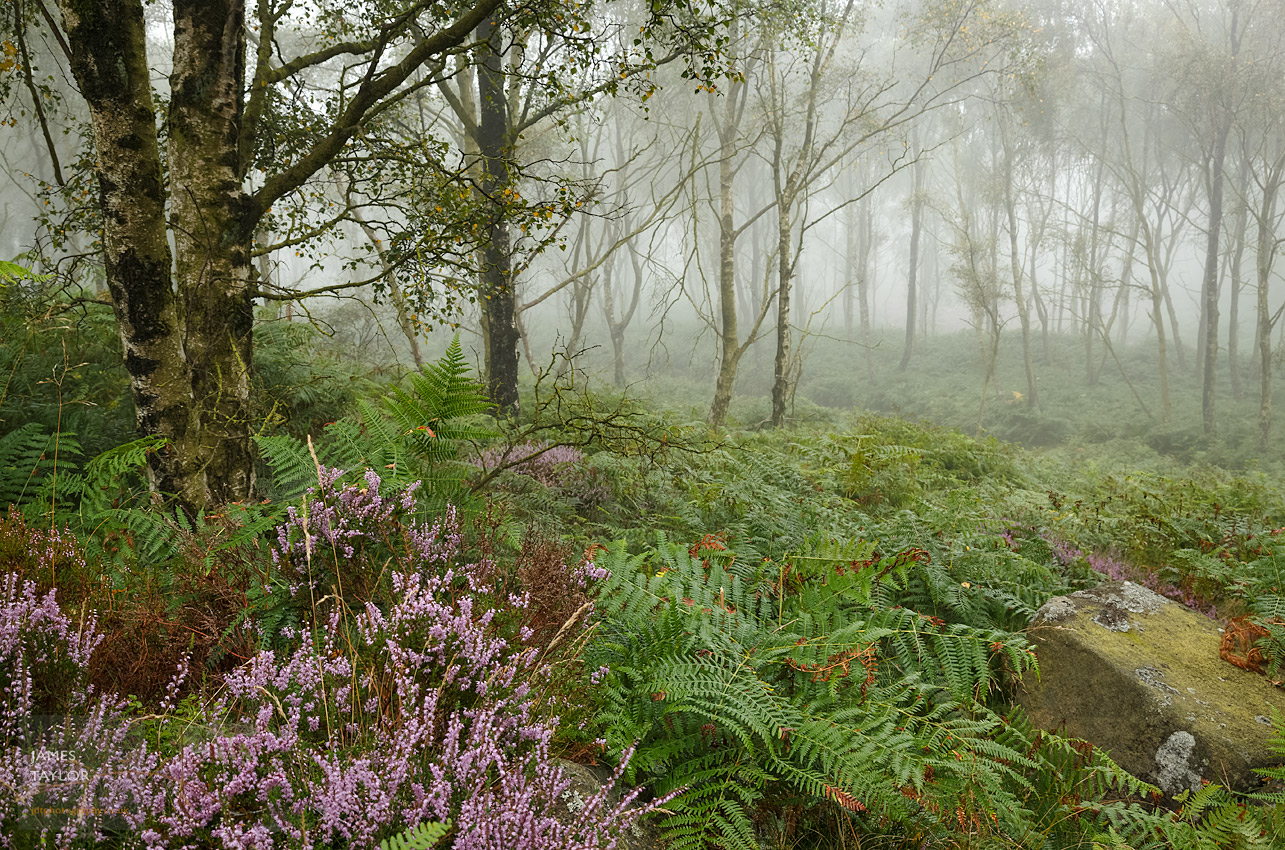 peak district in colour down in the woods fog