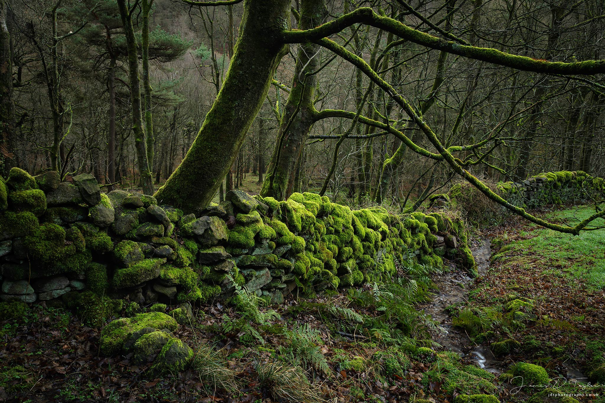 through-the-woods-moss-covered-wall