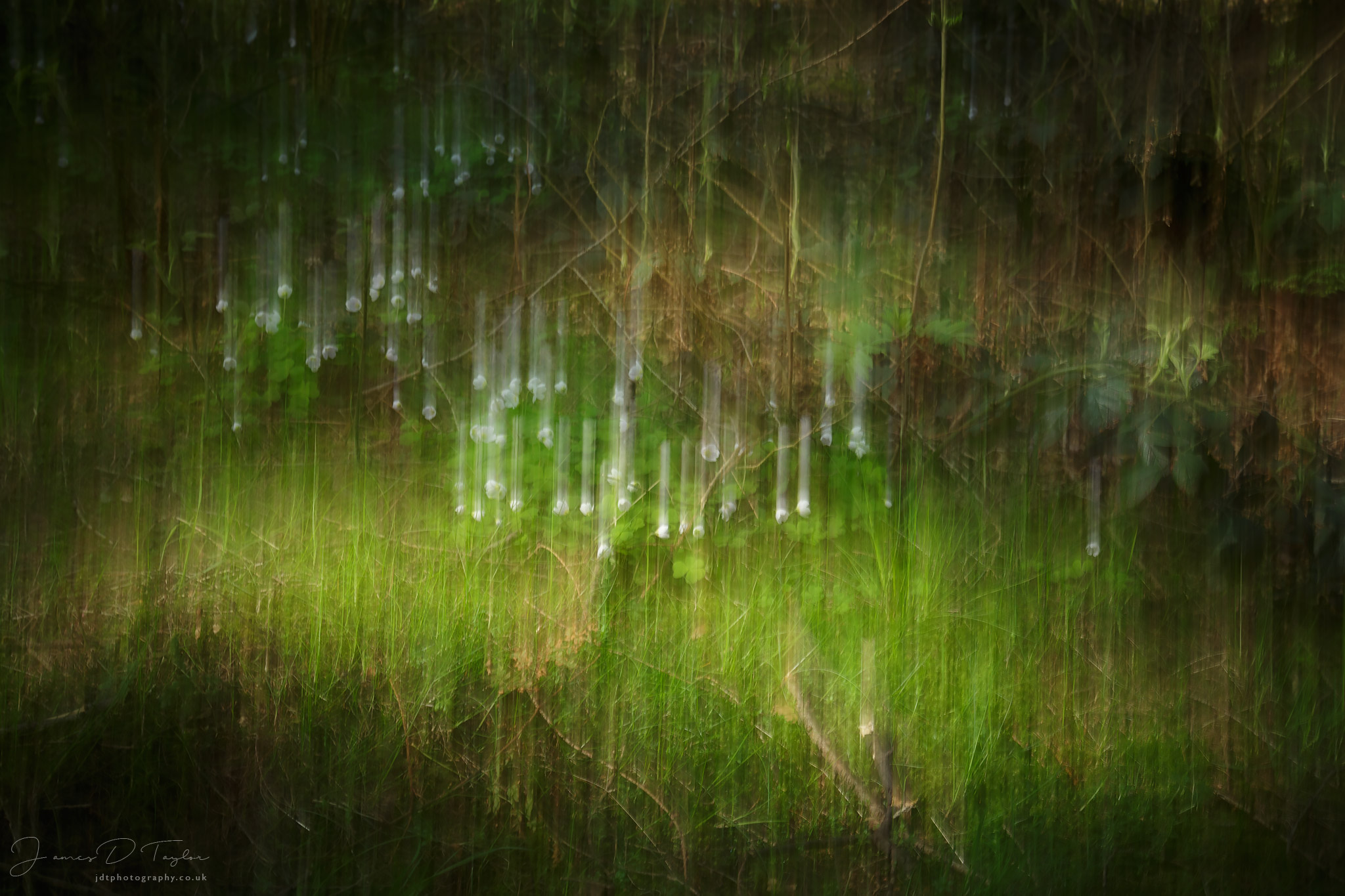 icm-flowers-forest-floor-peak-district