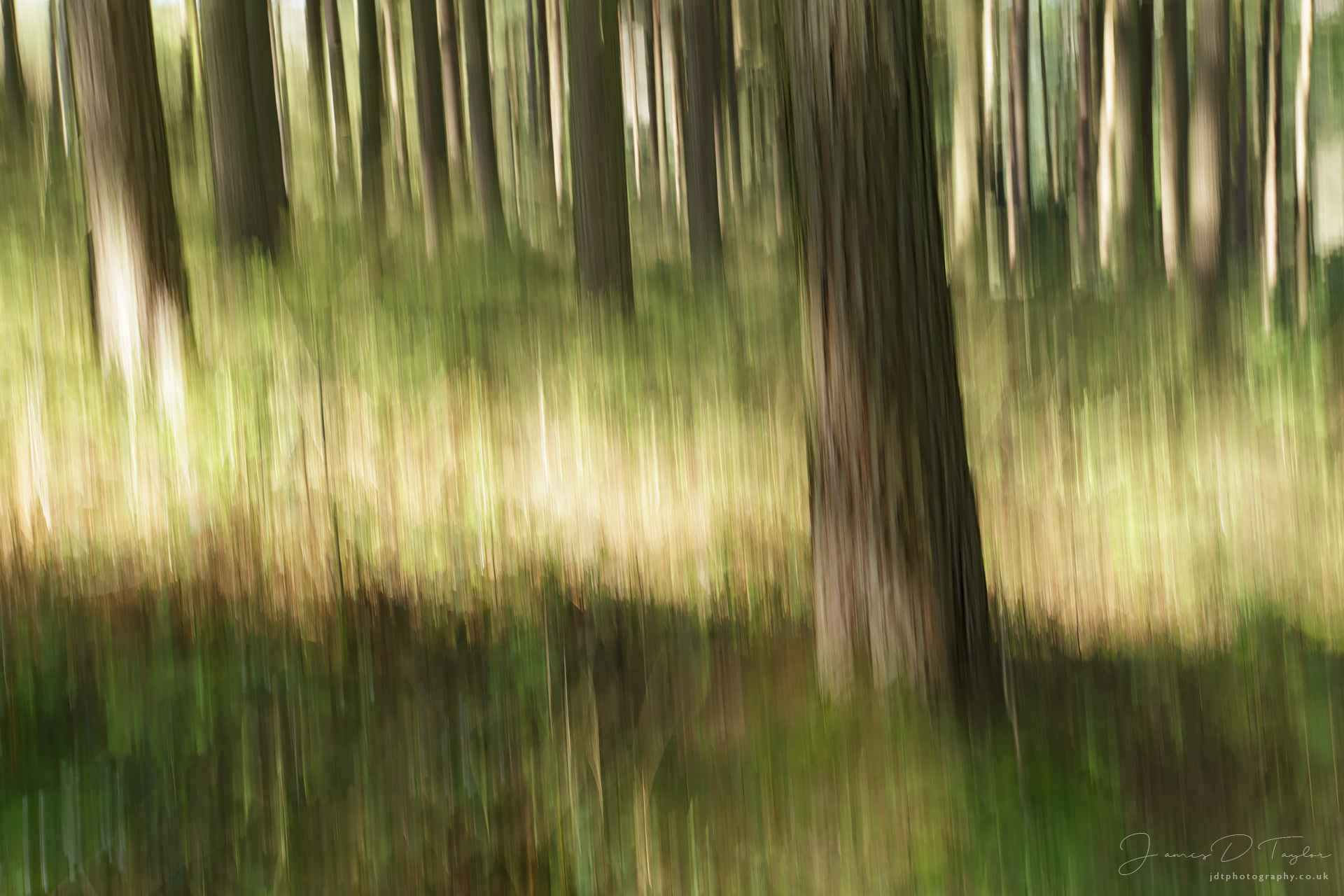 jdtphotography.co.uk-icm-woodland-sunlight-peak-district